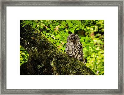 Muir Woods Owl Framed Print by La Rae  Roberts