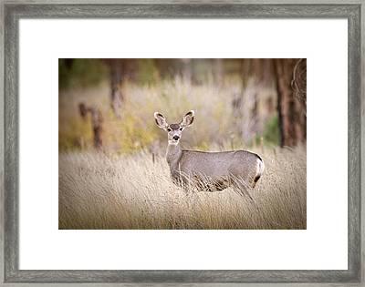 Mule Deer In The Woods  Framed Print by Saija Lehtonen
