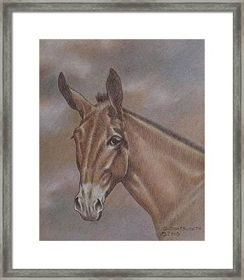 Mule Head Framed Print by Dorothy Coatsworth