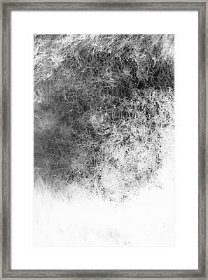 Nature Abstract Framed Print by Gaspar Avila
