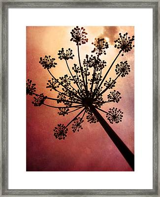 Nature's Fireworks Framed Print by Amy Tyler