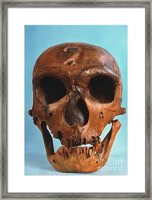 Neanderthal Skull Framed Print by Granger