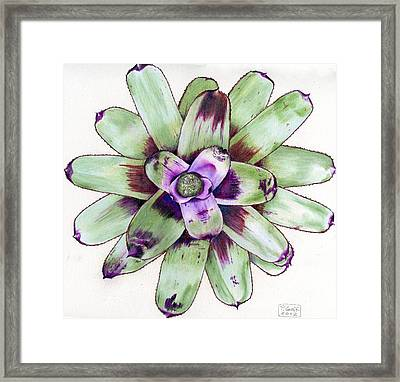 Neoregelia 'painted Delight' Framed Print by Penrith Goff