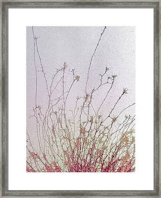 Nerve Cell Culture, Sem Framed Print by Steve Gschmeissner
