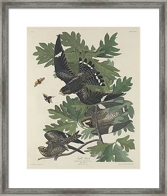Night Hawk Framed Print by John James Audubon