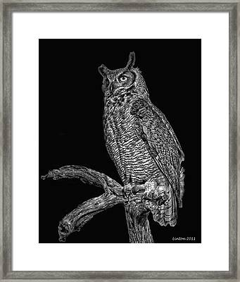 Night Owl Framed Print by Larry Linton