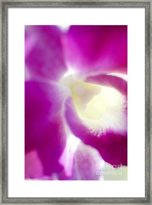 Orchid Abstract Framed Print by Ray Laskowitz - Printscapes