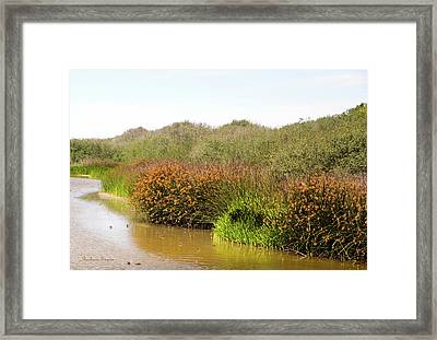 Oso Flaco Lake California State Park Framed Print by Barbara Snyder
