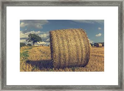 Outstanding In It's Field Framed Print by Chris Fletcher
