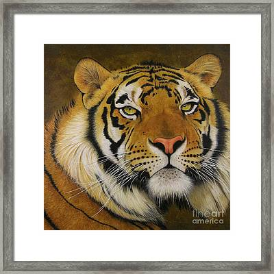 Ozzi Framed Print by Lawrence Supino
