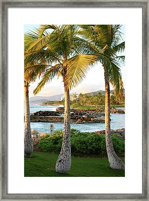 Palm Trees 2 Framed Print by Eddie Freeman