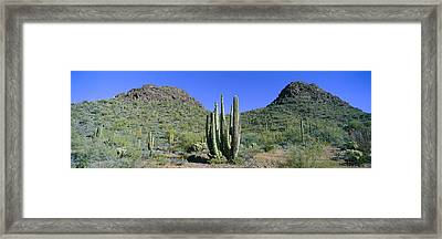 Panoramic View Of Springtime Framed Print by Panoramic Images