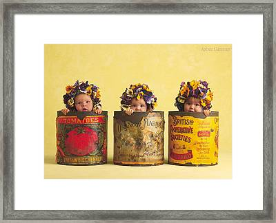 Pansies Framed Print by Anne Geddes