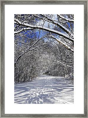 Path In Winter Forest Framed Print by Elena Elisseeva