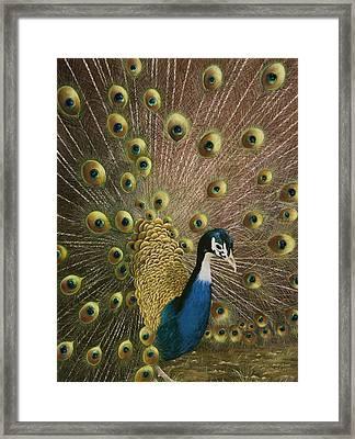 Petit Jean Peacock Framed Print by Mary Ann King