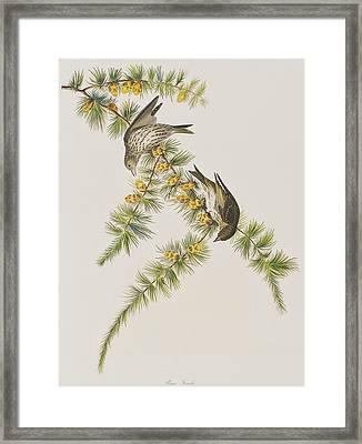 Pine Finch Framed Print by John James Audubon