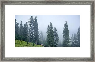 Pine Trees Framed Print by Svetlana Sewell