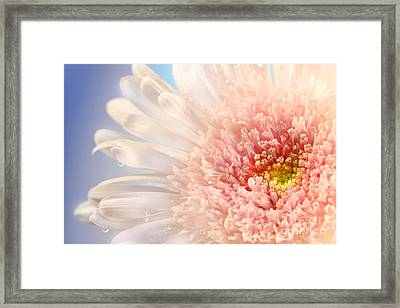 Pink Daisy  Framed Print by Sandra Cunningham