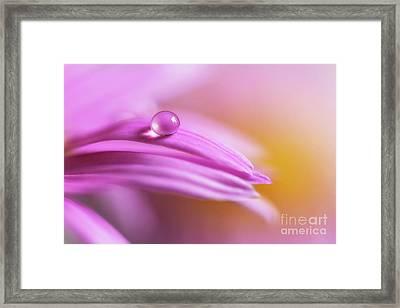 Pink Daisy Framed Print by Veikko Suikkanen