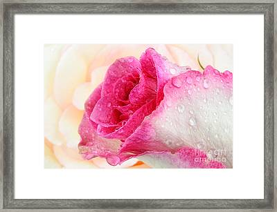 Pink Framed Print by Mark Johnson