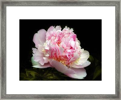 Pink Peony Framed Print by Jessica Jenney
