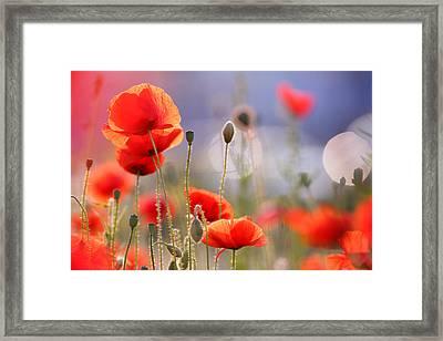 Poppy Delight Framed Print by Roeselien Raimond