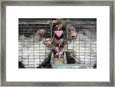 Poultry Farm Framed Print by RIA Novosti