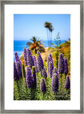 Pride Of Madeira Flowers In Orange County California Framed Print by Paul Velgos