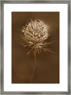 Queen Anne's Lace Wildflower Seed Pods Framed Print by Jennie Marie Schell