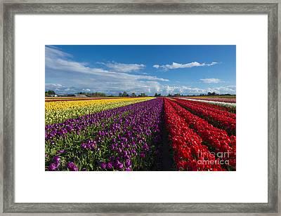 Rainbow Fields Framed Print by Mike Dawson