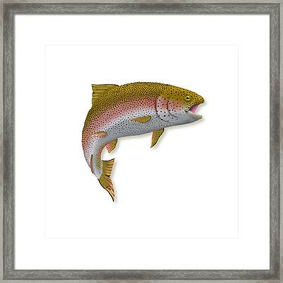 Rainbow Trout 1 Framed Print by Agustin Goba