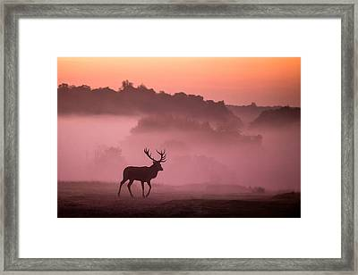 Red Deer Stag Framed Print by Ian Hufton