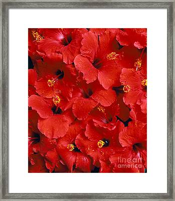 Red Hibiscus Framed Print by Tomas del Amo - Printscapes