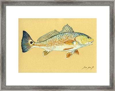 Redfish Painting Framed Print by Juan  Bosco