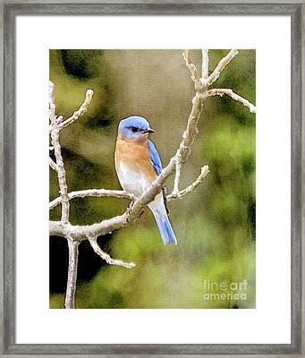 Rhapsody In Blue Framed Print by Betty LaRue