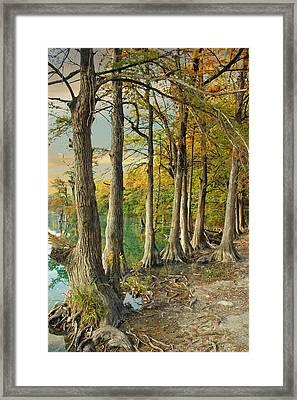 River Road Cypress Framed Print by Robert Anschutz