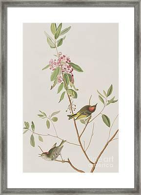Ruby Crowned Wren Framed Print by John James Audubon