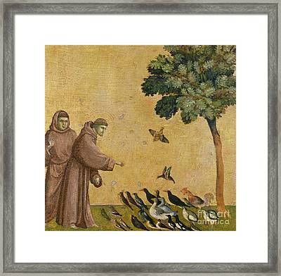 Saint Francis Of Assisi Preaching To The Birds Framed Print by Giotto di Bondone