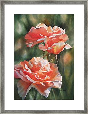 Salmon Colored Roses Framed Print by Sharon Freeman
