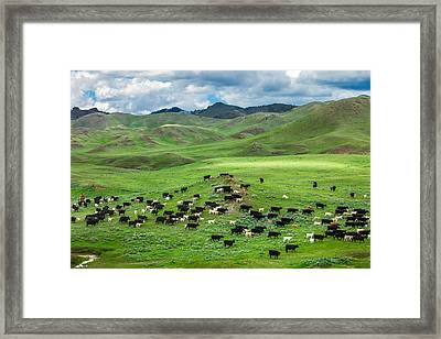 Salt And Pepper Pasture Framed Print by Todd Klassy