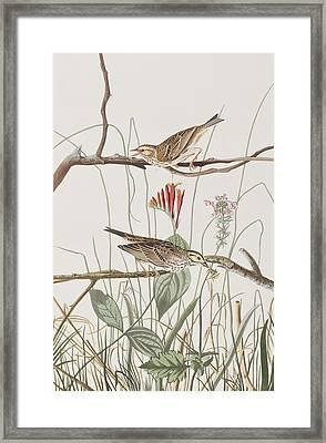 Savannah Finch Framed Print by John James Audubon