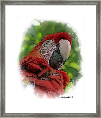 Scarlet Macaw Framed Print by Larry Linton