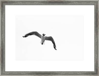 Seagull Framed Print by Fine Arts
