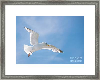 Seagull Flying High Framed Print by Amanda And Christopher Elwell