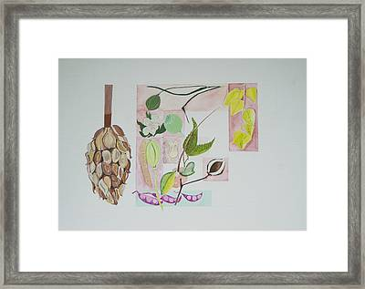 Seed Pods Framed Print by Diana Davenport