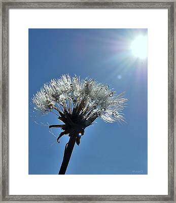 Shining Framed Print by Marija Djedovic