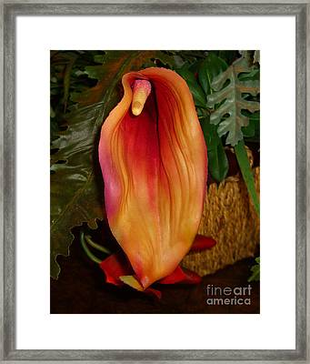 Single Spath Flower Framed Print by Merton Allen