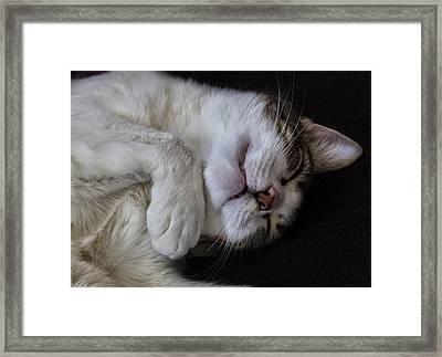 Sleeping Cat Framed Print by Robert Ullmann