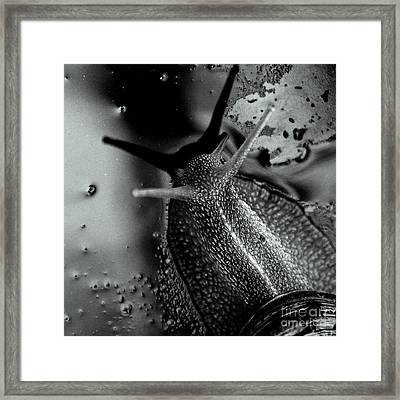 Snail Framed Print by Stelios Kleanthous