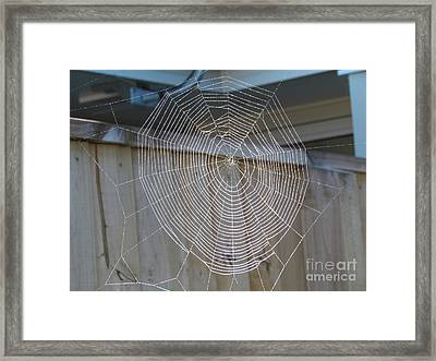 Spider's Web Framed Print by Joyce Woodhouse